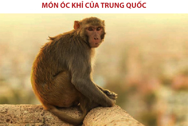 Món óc khỉ tươi của Trung Quốc