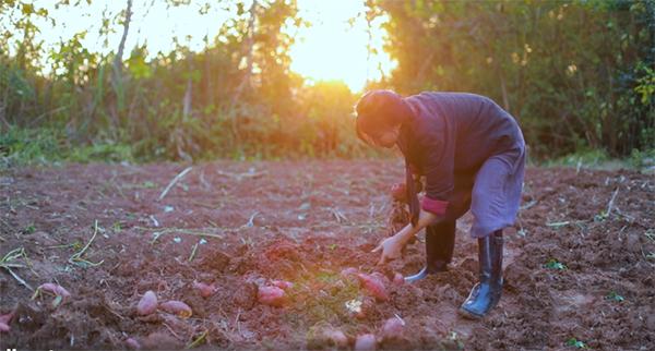 Lý Tử Thất đào khoai lang