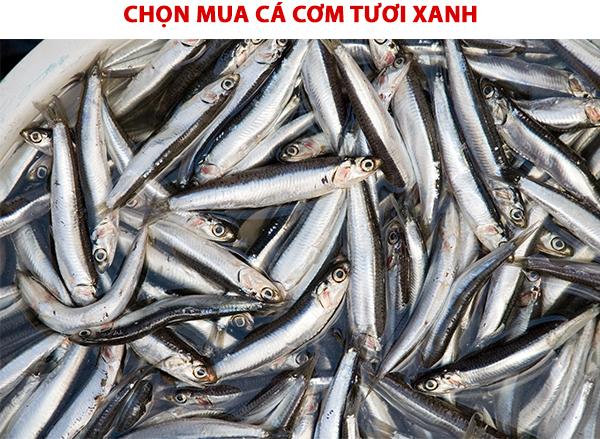 Chọn mua cá cơm tươi xanh