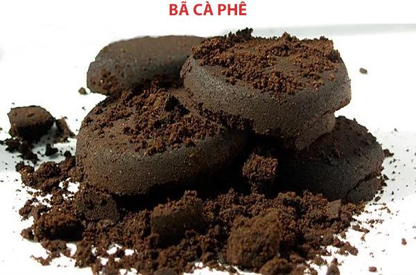 Lấy bã cà phê để trồng nấm kim châm