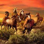 nhạc trữ tình hòa tấu vó ngựa trên đồi cỏ hoang