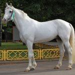 Phong thủy biểu tượng ngựa trắng và ý nghĩa của nó