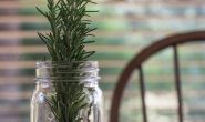 TOP 5 loại cây đuổi muỗi tại nhà hiệu quả